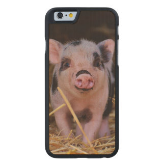 mini pig carved maple iPhone 6 case