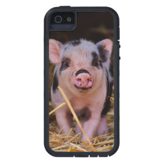 mini pig case for the iPhone 5