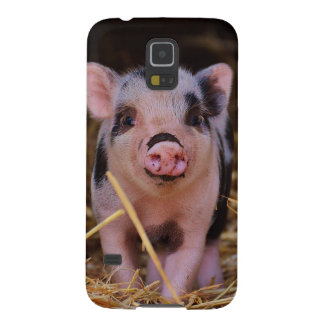 mini pig cases for galaxy s5