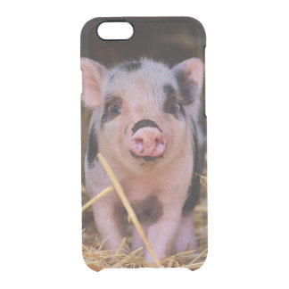 mini pig clear iPhone 6/6S case