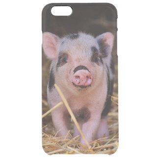 mini pig clear iPhone 6 plus case
