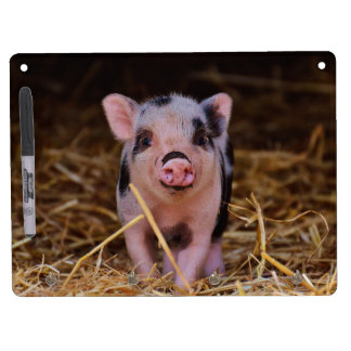 mini pig dry erase board with keychain holder
