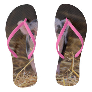 mini pig flip flops
