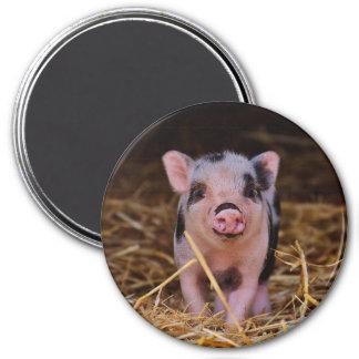 mini pig magnet