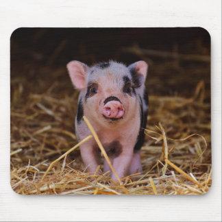 mini pig mouse pad