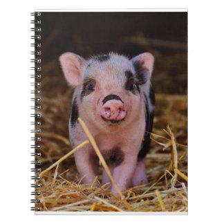 mini pig notebook