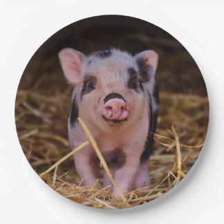 mini pig paper plate