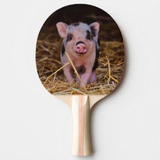 mini pig ping pong paddle