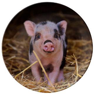 mini pig plate