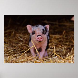 mini pig poster