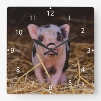 mini pig square wall clock