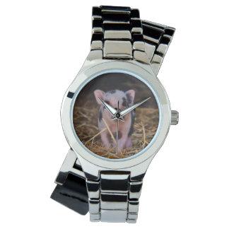 mini pig watch