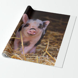 mini pig wrapping paper