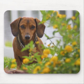 Mini Red Dachshund Mousepad