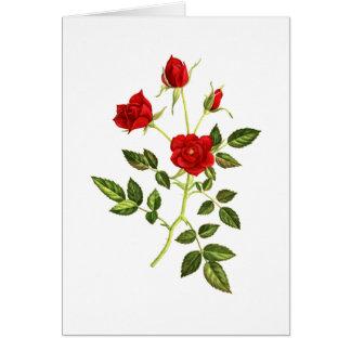 Mini Red Rose Card