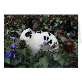 Mini Rex Rabbit Greeting Card