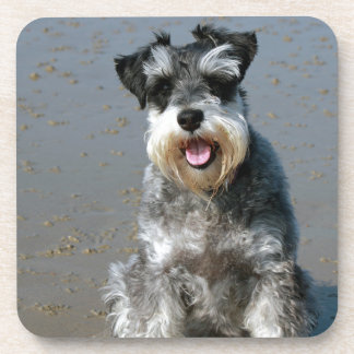 mini schnauzer-at the beach.png coaster