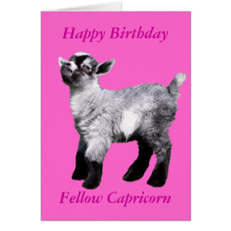 Miniature Baby Goat Card