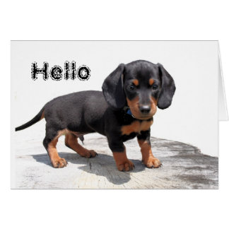 Miniature Dachshund Card