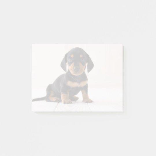 Miniature Dachshund Sitting Post-it® Notes
