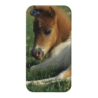 Miniature Foal Laying Down iPhone 4 Case