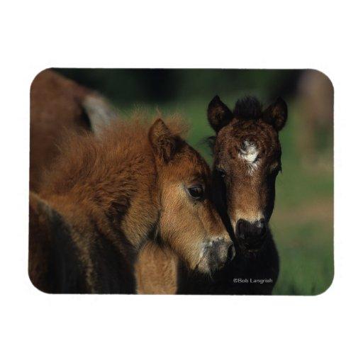 Miniature Foals 2 Vinyl Magnets