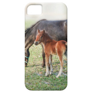 Miniature Horse Foal - Customized Colt & Filly iPhone 5 Cover