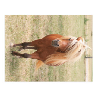 Miniature Horse With A Full Mane Postcard