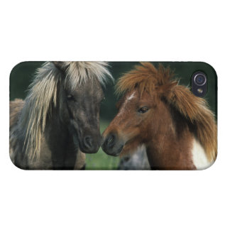 Miniature Horses Touching iPhone 4/4S Cover