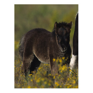 Miniature Mare & Foal in the Flowers Postcard