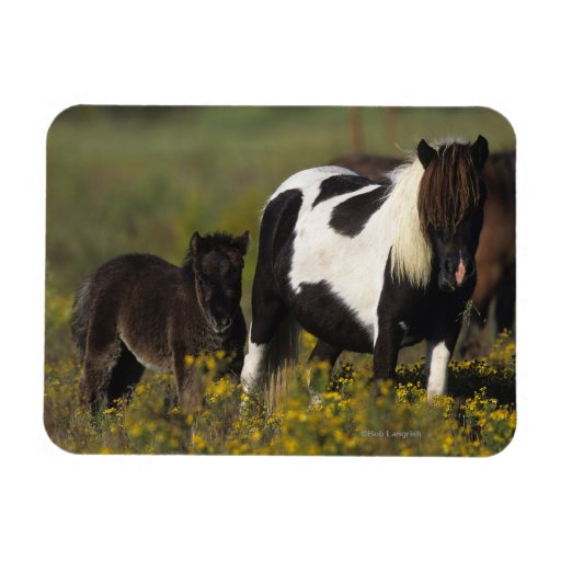 Miniature Mare & Foal in the Flowers Rectangular Magnet