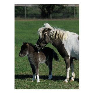 Miniature Mare & Foal Standing Postcard