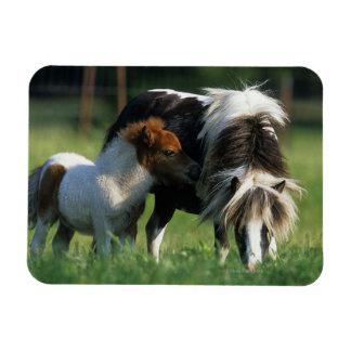 Miniature Mare & Foals 2 Rectangular Photo Magnet