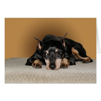 Miniature Pinscher aka Min Pin Card