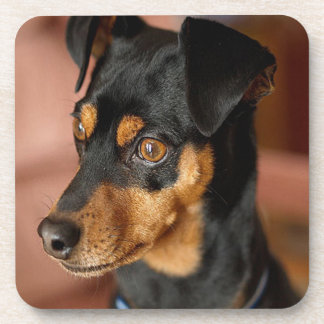 Miniature pinscher coaster