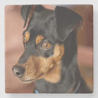 Miniature pinscher stone coaster