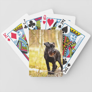 miniature-schnauzer bicycle playing cards