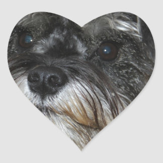 Miniature Schnauzer Heart Sticker
