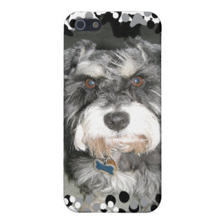 Miniature Schnauzer Photo Cover For iPhone 5/5S