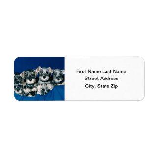Miniature Schnauzer Puppies Return Address Label