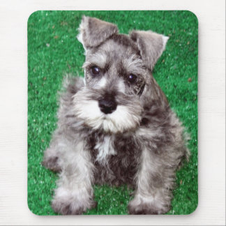 Miniature Schnauzer Puppy Mousepad