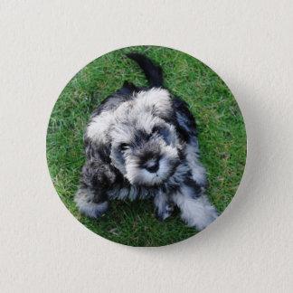 Miniature Schnuazer Puppy Button