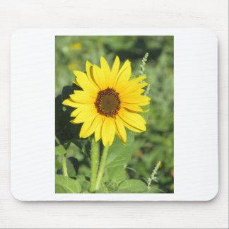 Miniature Wild Sunflower Bloom Mouse Pad