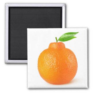 Minneola tangelo citrus fruit square magnet