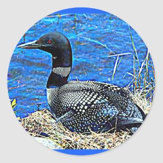 Minnesota Common Loon Classic Round Sticker