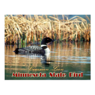 Minnesota State Bird - Common Loon Postcard