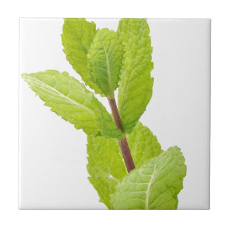 Mint leaves tile