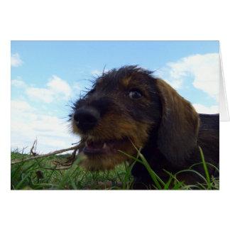 Mischievous Dachshund Puppy Card
