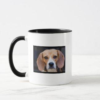 Miss Molly Mug