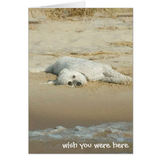 Miss You-goldendoodle laying on beach Card